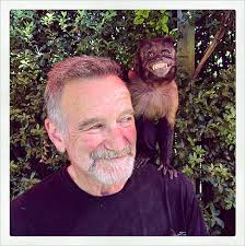 robin williams monkey